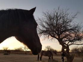 Rusticité et plaisirs de la table dans le désert américain