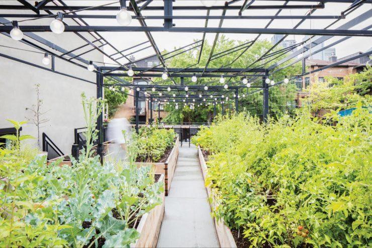 La nature sur les toits