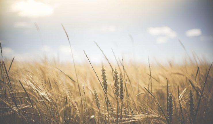 Agriculture raisonnée