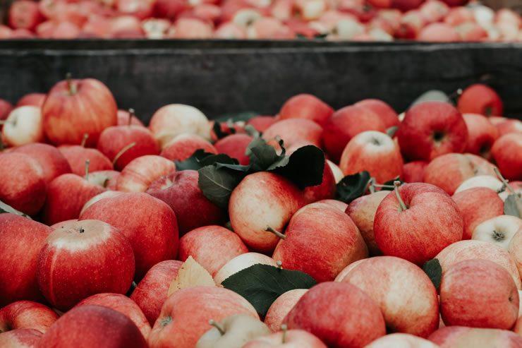 Au coeur des vertus de la pomme