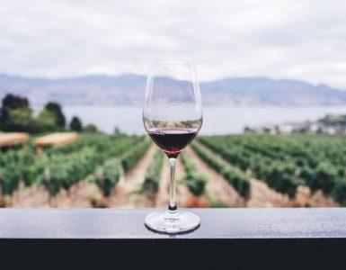 Oser l'impossible avec les vins du Québec
